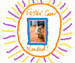 Cat foster carer needed