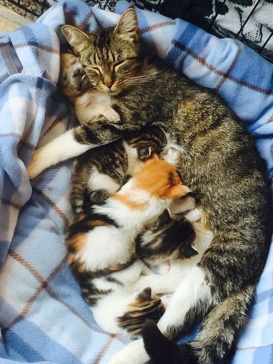 Puppy raised by cat mom