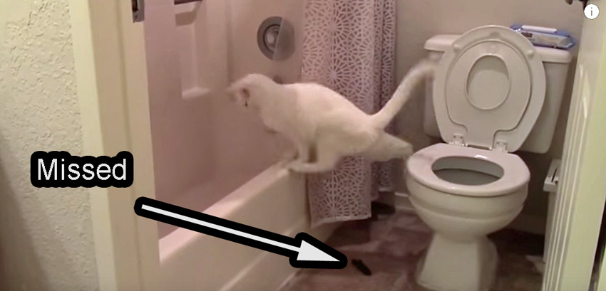 Toilet training cats