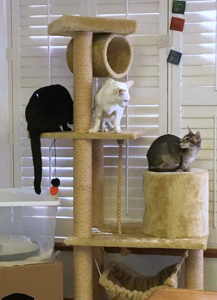 Aki Poe Hubble on cat tree