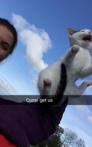 Cat cruelty in Dundee