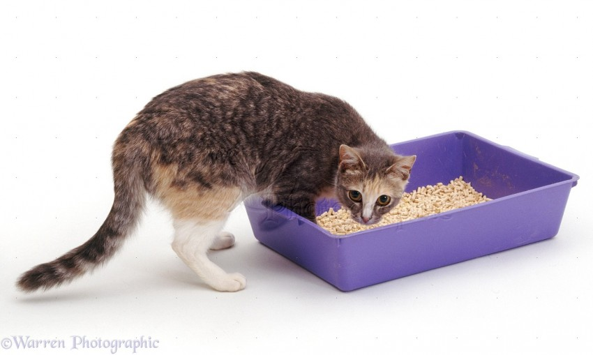 cat uses litter tray