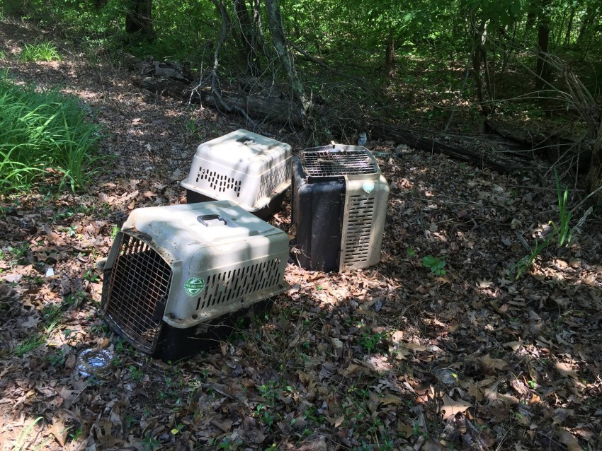 Dead cats in carriers, Madison and surrounding area, USA