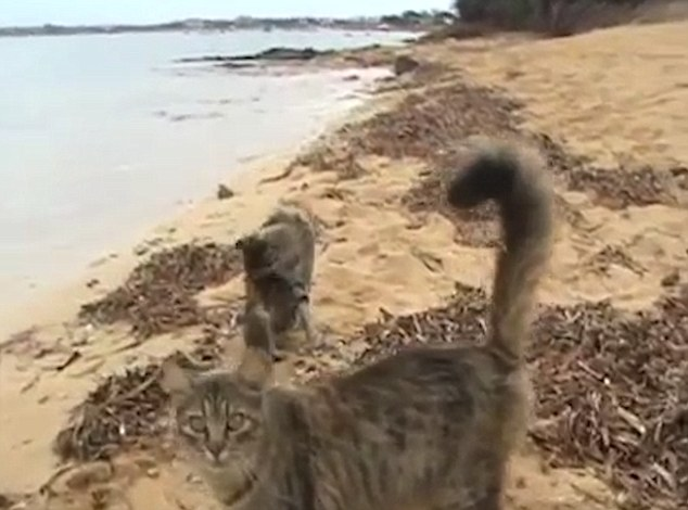 Feral cats on beach in Sardinia