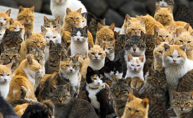 Overpopulation of cats