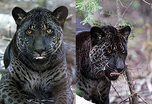 Cool Names For Big Cats