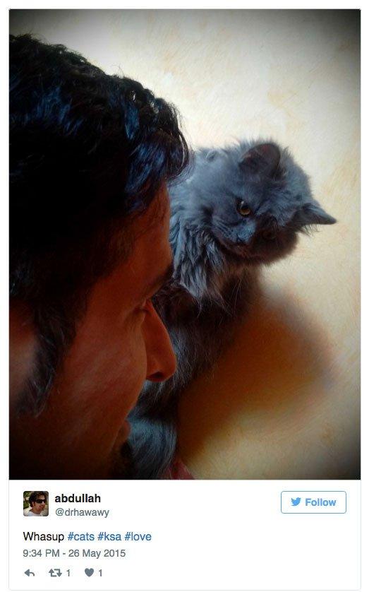 Saudi Cat Selfie
