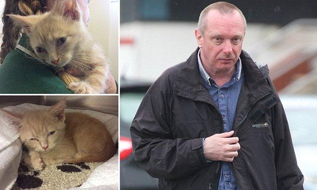 ginger kitten beaten to death by jealous husband