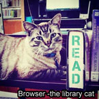 Browser a library cat