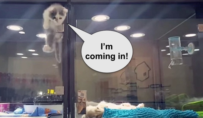 Kitten climbs into puppy's cage