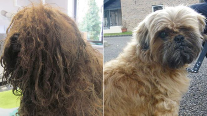Badly neglected dogs