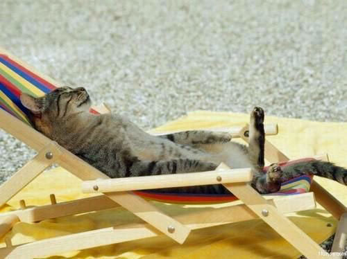 Vacation with your cat