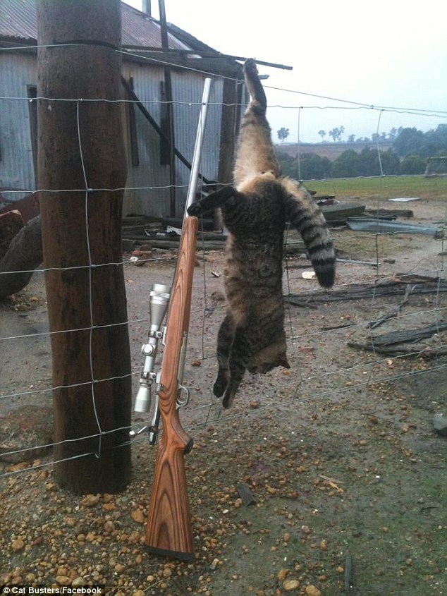 Cat Busters kill strung up on fence
