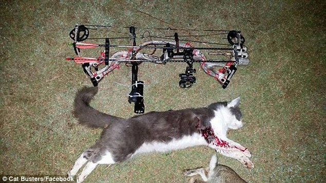 Cat Busters showing off their cat kills on Facebook