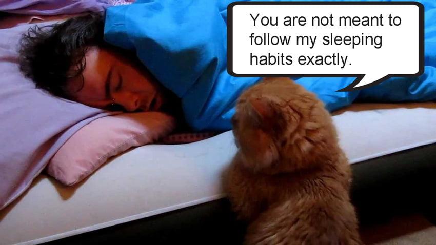 Cats teach entrepeneurs