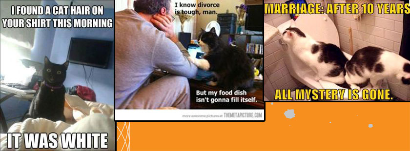 Divorce and cats
