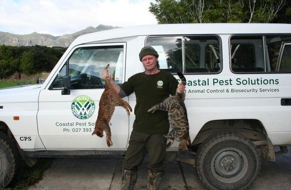 Feral cats NZ