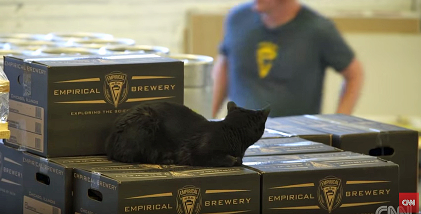 Feral cats protect brewery from rats