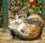 Karachi cat lady