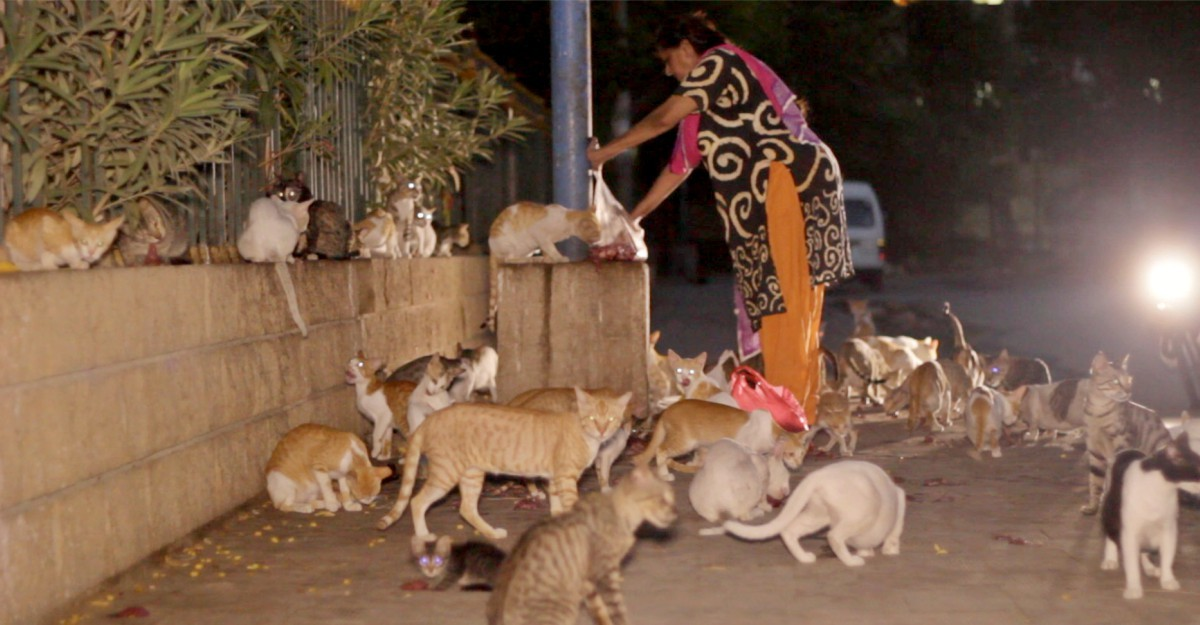 Karachi cat lady feeds feral cats daily