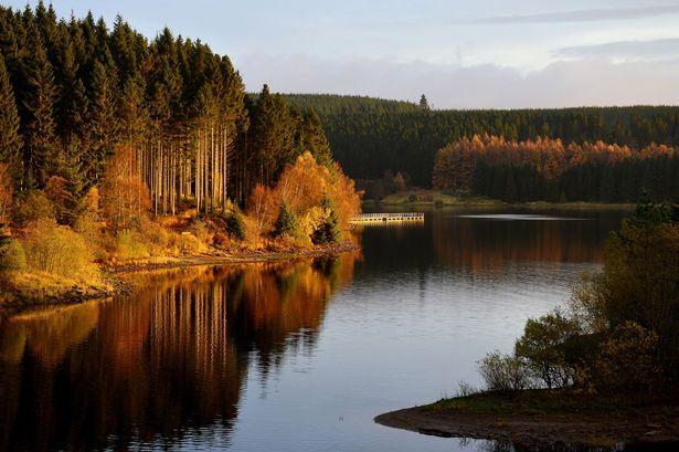Kielder forest area