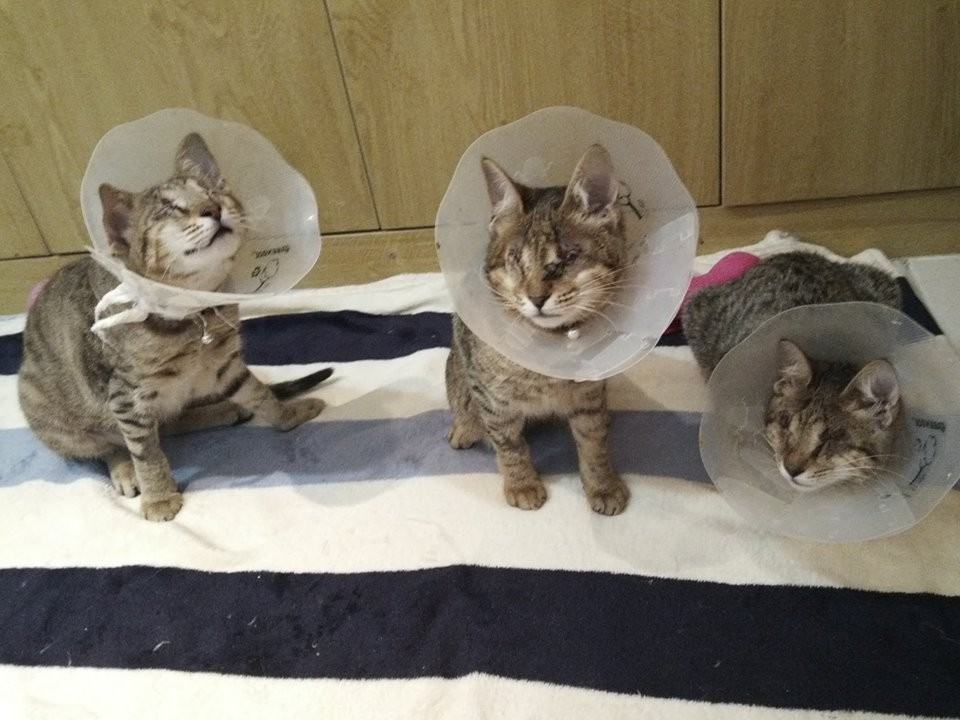 The three blind siblings after eye sugery