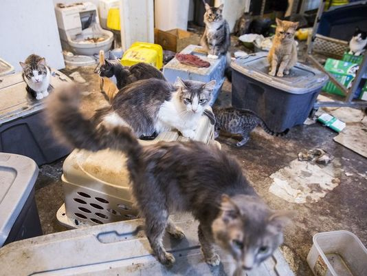 111 cats in condemned home USA