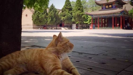 China - museum feral cat
