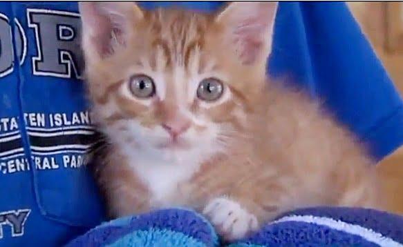 Kitten survives 80 miles in car engine