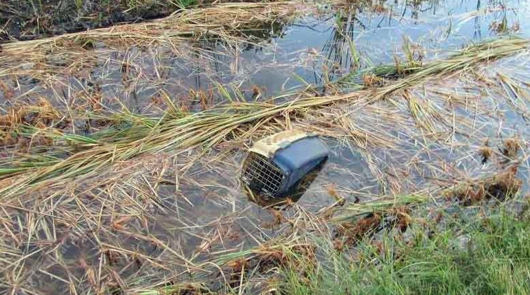 Cat disposed of in carrier in ditch