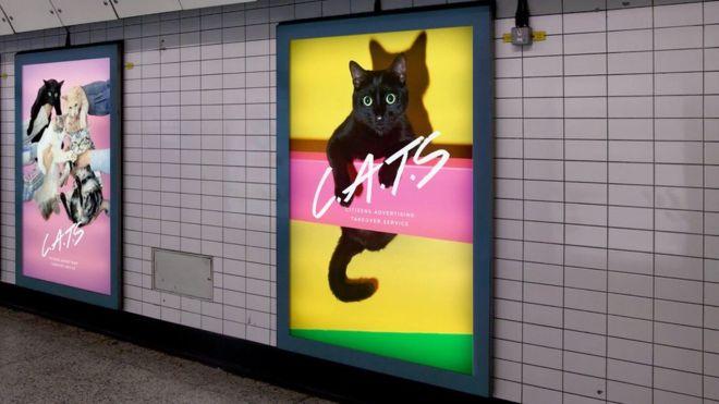 Cat pics on the underground
