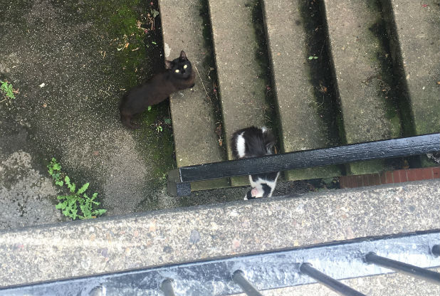 Feral cats of Nottingham, UK