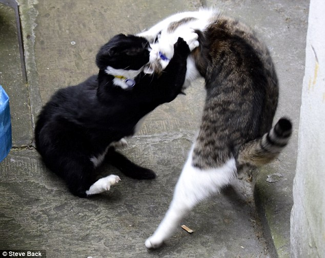Larry and Palmerston fighting