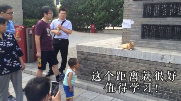 Museum cats in Central China are now safe