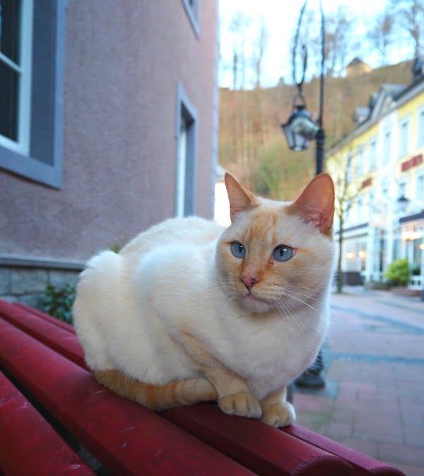 Outdoor cat in Luxembourg