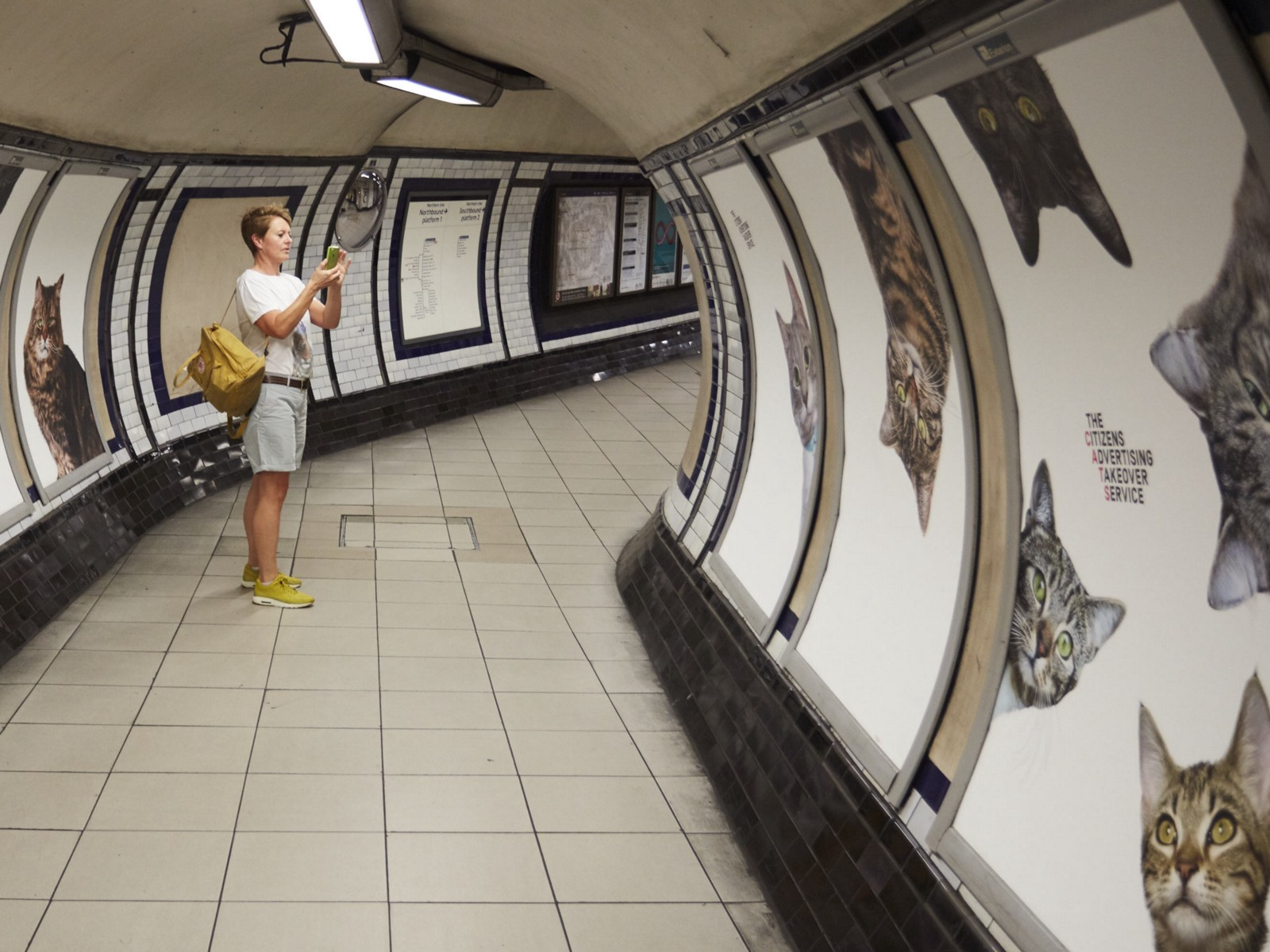 Pictures of cats replace adverts on underground station