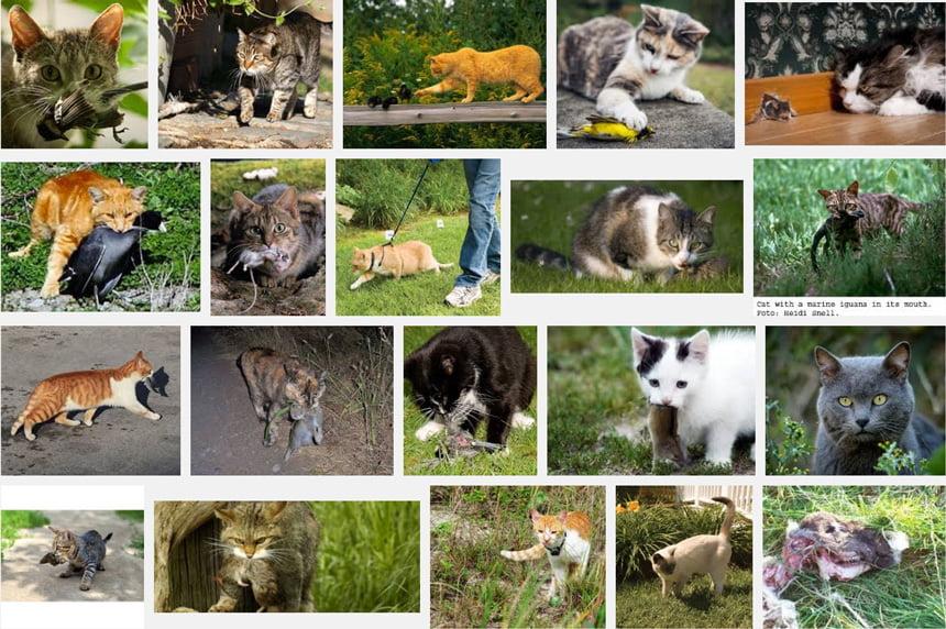 Cat predation montage