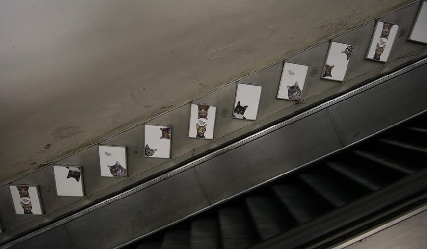 Cat posters on London Underground