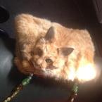 Dead cat handbag