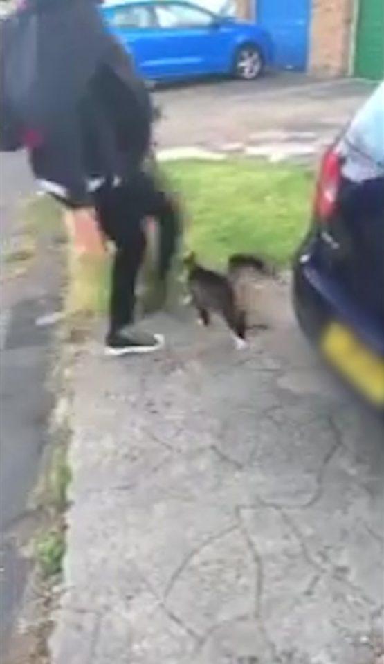 Kid kicks cat