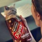 Kittens in advert