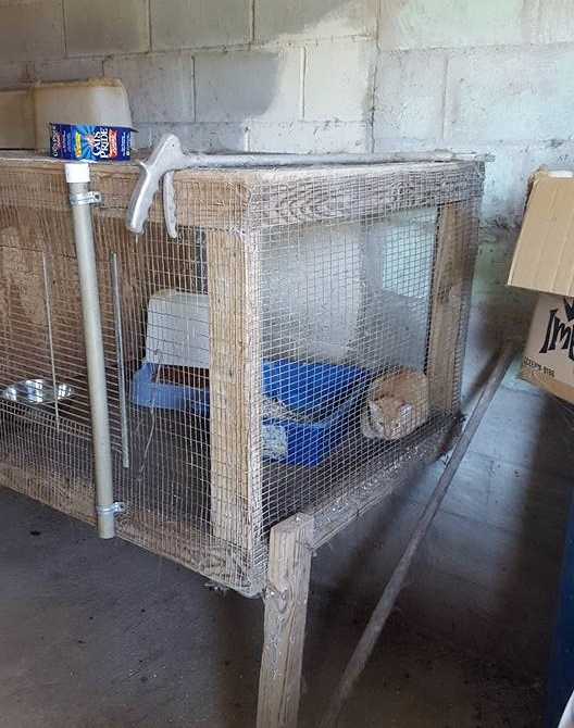 cats found with no food or water