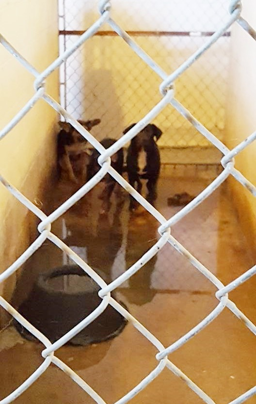 dogs were found standing in their own filth