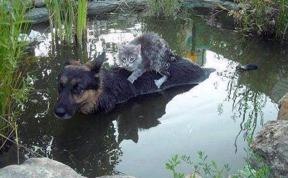 Dog carrying cat photo is actually from May 2014 Bosnia flood