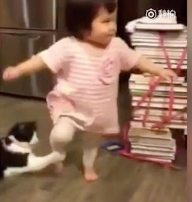 Evil cat trips up todler and ennjoys it