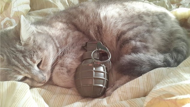 ISIS cat and hand grenade