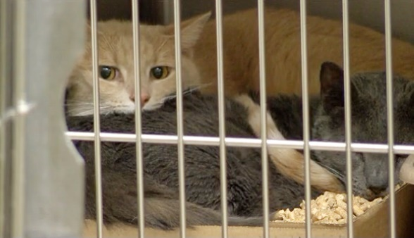 2 rescued cats taken to Iredell County Animal Shelter
