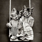 Cats as kids
