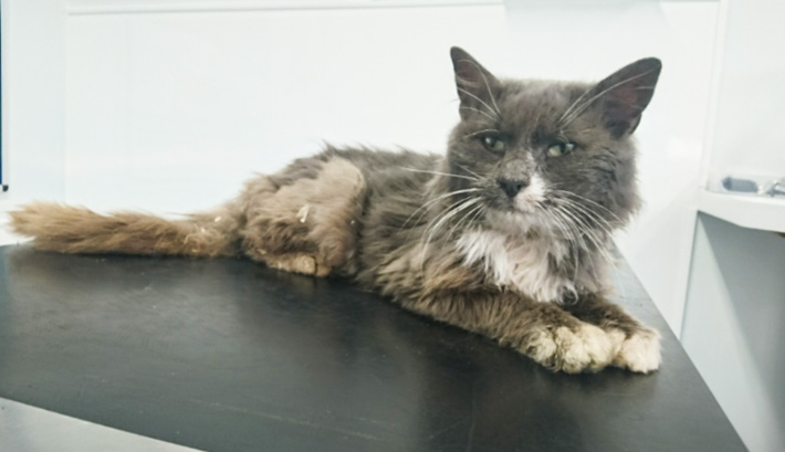 Declawed cat found in UK