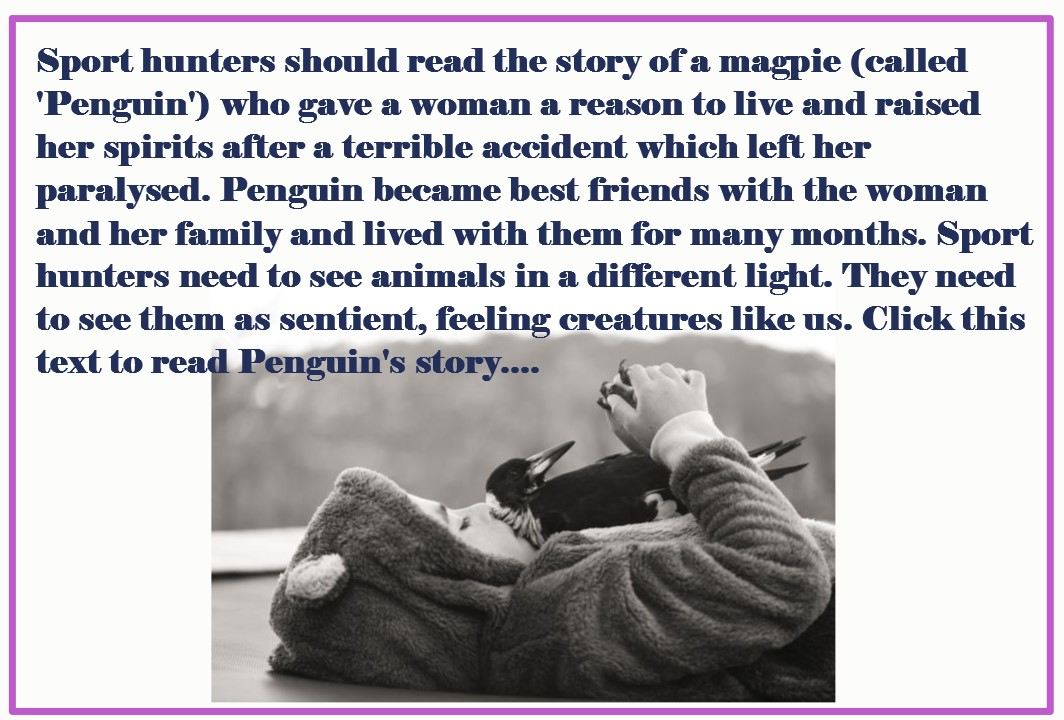 Click on the image above to go to the story of a magpie who gave a woman a reason to live